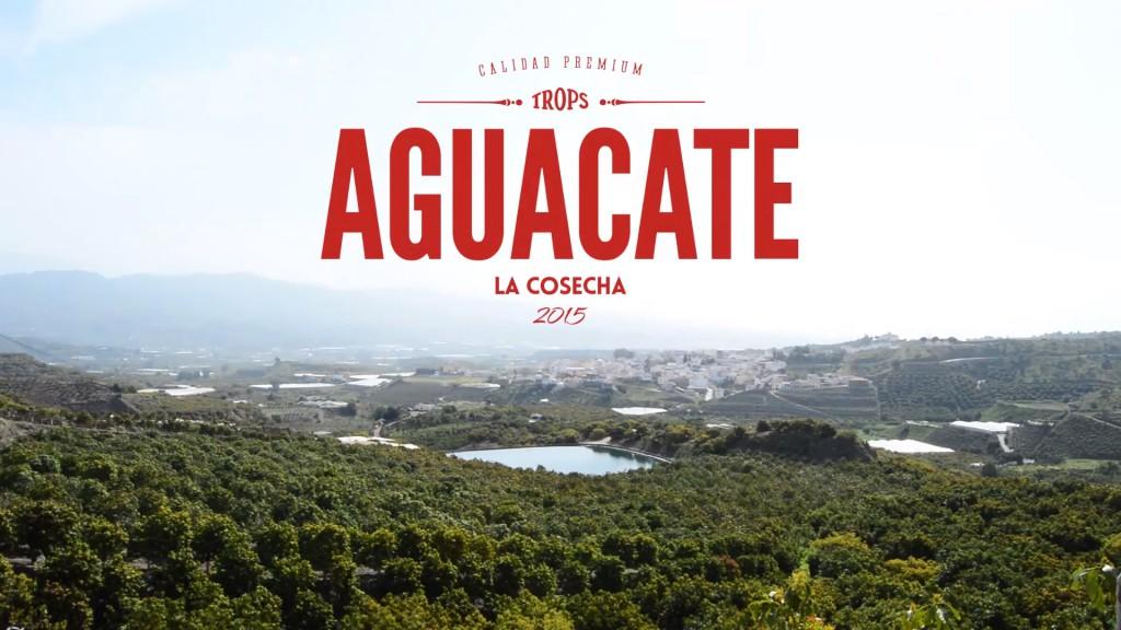 Trops Cosecha Aguacate Hass 2015