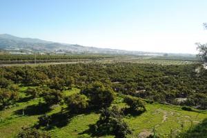 Panorámica Vélez con plantación aguacate Trops
