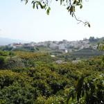 026 - Cosecha de Aguacate Hass Trops 2015