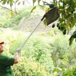 014 - Cosecha de Aguacate Hass Trops 2015