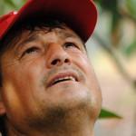 012 - Cosecha de Aguacate Hass Trops 2015