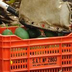 032 - Cosecha de Aguacate Hass Trops 2015