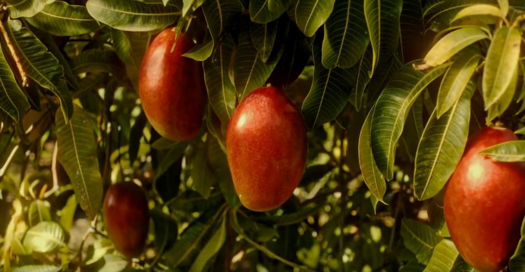 Spot publicitario TROPS, El mango más mango (Versión 10'')